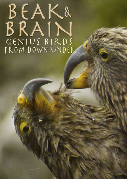Beak & Brain: Genius Birds From Down Under on Netflix UK