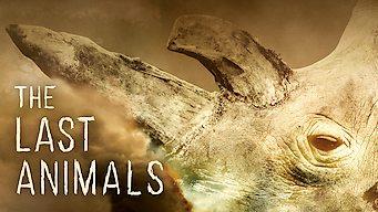 The Last Animals (2017)