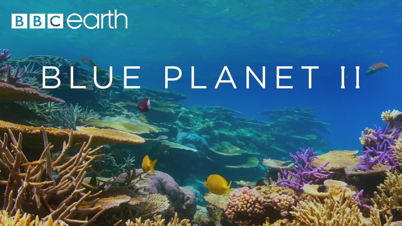 Blue Planet II on Netflix UK