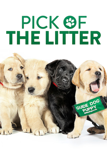 Pick of the Litter on Netflix UK